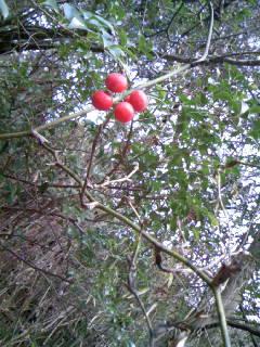 紅い実と小鳥